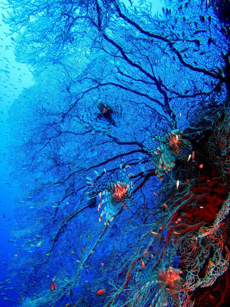 Sharm El Naga koralai 2
